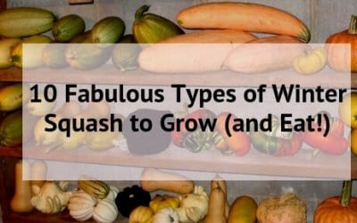 10 Fabulous Types of Winter Squash to Grow (and Eat!)