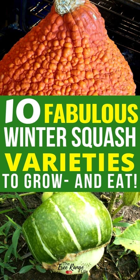 Vegetable Gardening: Did you know there are more 100 different types of winter squash? This staple food is full of antioxidants, vitamins, and minerals and can be used in many different recipes. Read about my top 10 favorite winter squash varieties and find a few new ones to grow- and eat!