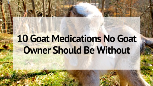 10 Goat Medications No Goat Owner Should Be Without