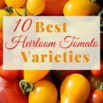 The Best Heirloom Tomato Varieties