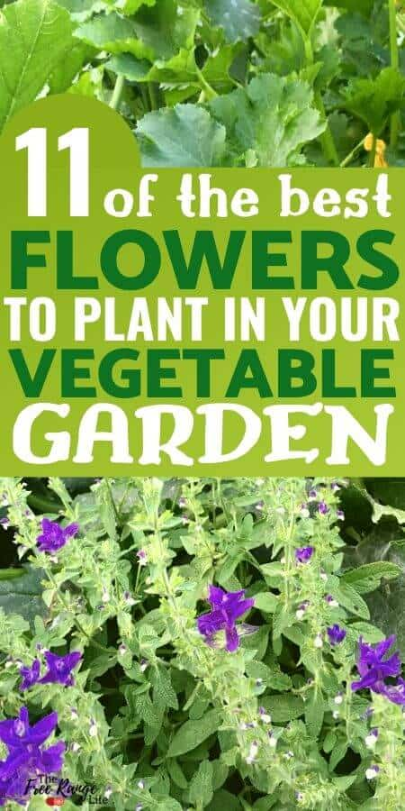 11 Best flower for the vegetable garden
