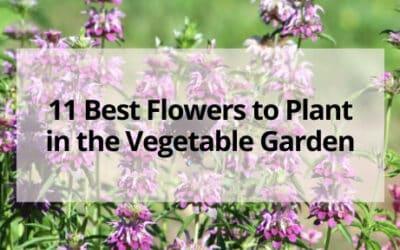 11 Best Flowers for Your Vegetable Garden