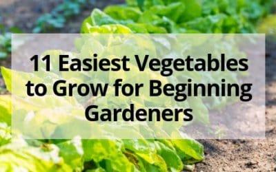 11 Easiest Vegetables to Grow for Beginning Gardeners