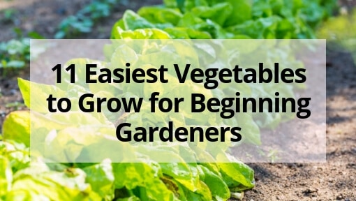 11 Easiest Vegetables to Grow for Beginning Gardeners
