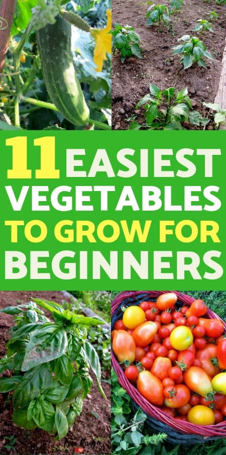 Vegetable Gardening for Beginners: Learn which are the easiest vegetables to grow if you are a beginning gardener, plus guides on how to grow each of them and tips to get started!