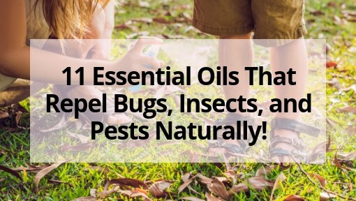 11 Essential Oils That Repel Bugs, Insects, and Pests Naturally!