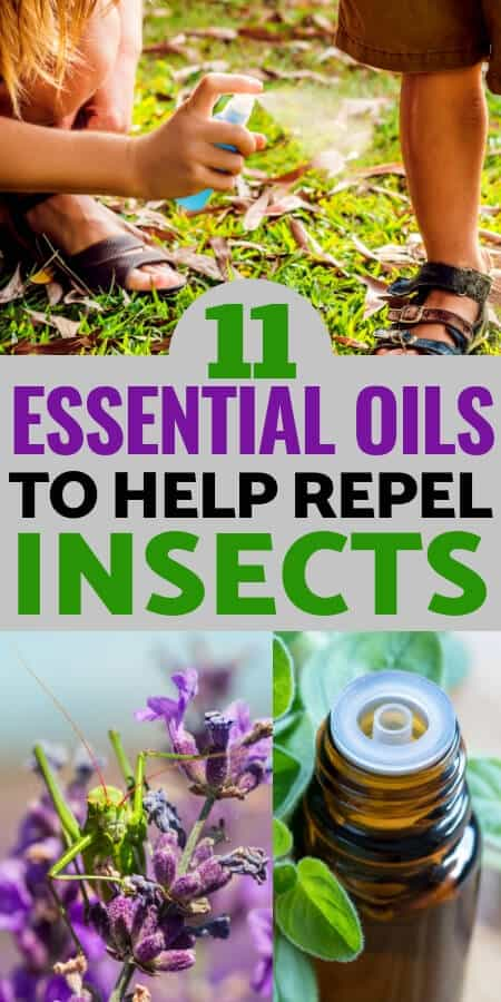 Natural Health: Bugs and insects are a big problem, learn the essential oils that repel bugs plus how to use them in your home and on your body to control pests naturally!