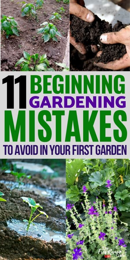 11 Beginning Gardening Mistakes to avoid in your first garden