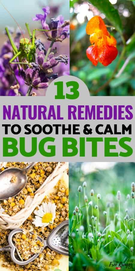 Natural Health: Learn how to stop the itch from mosquitoes, fleas, and other bugs with these natural remedies for bug bites- many of which you have on hand in your home!