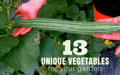 13 Unique Vegetables for Your Garden