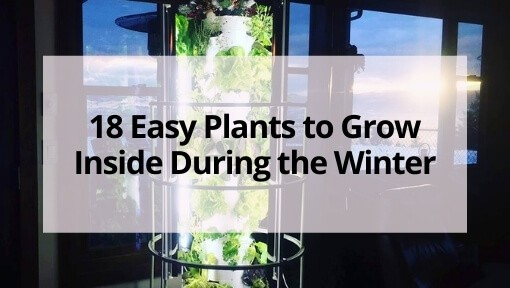 18 Easy Plants to Grow Inside During the Winter