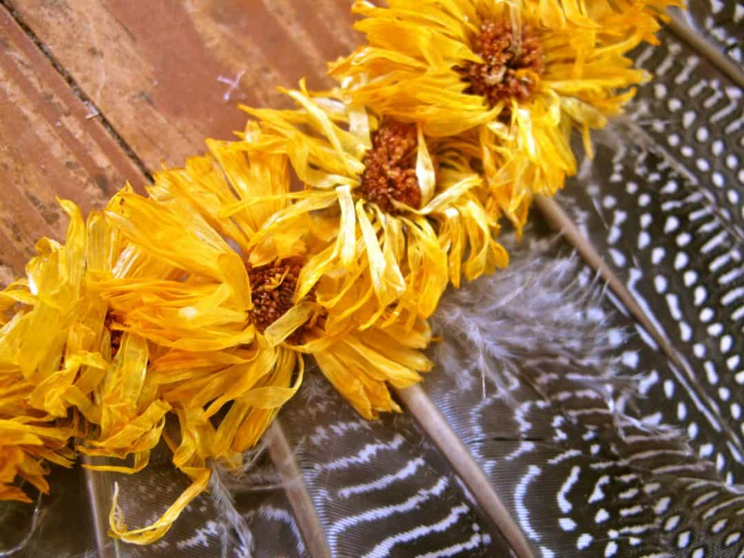 calendula on a feather wreath