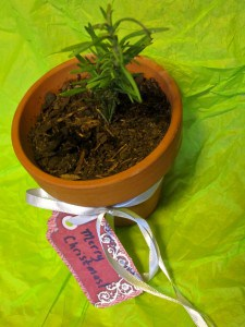 potted herbs for christmas