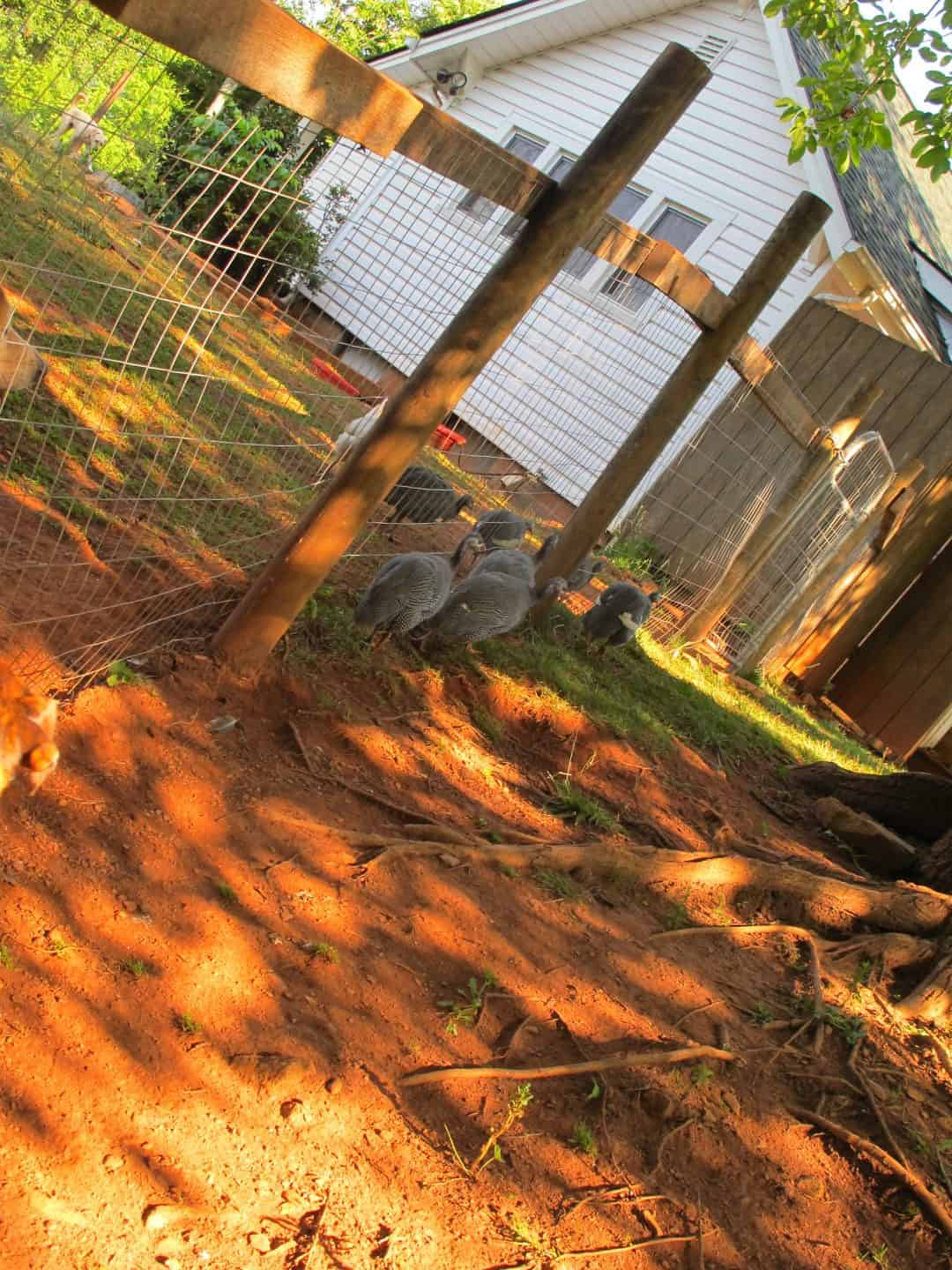 The Ultimate Guide To Fence Options Of The Farm The Free