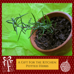 Homemade Homestead Christmas: Potted Herbs