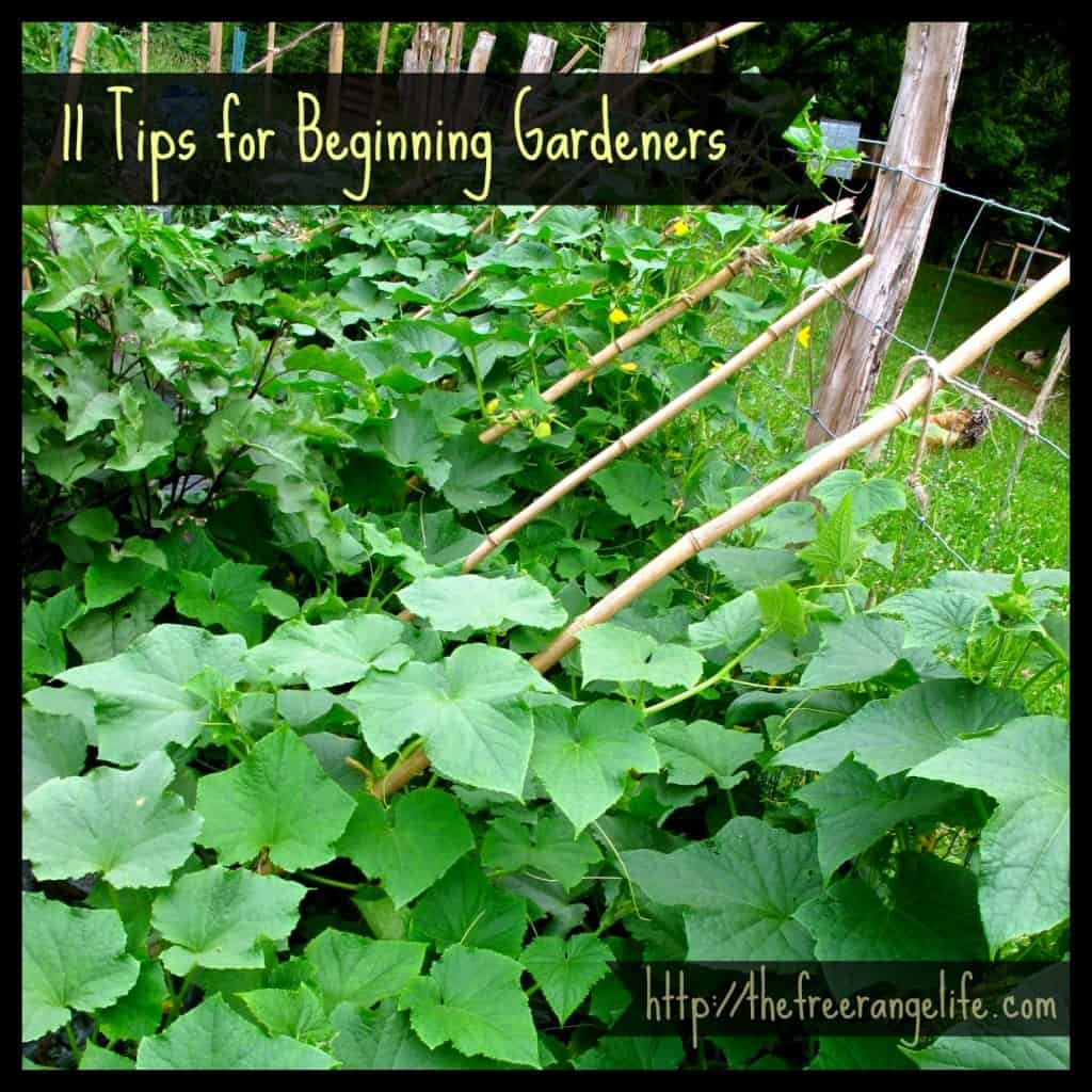 tips for beginning gardeners