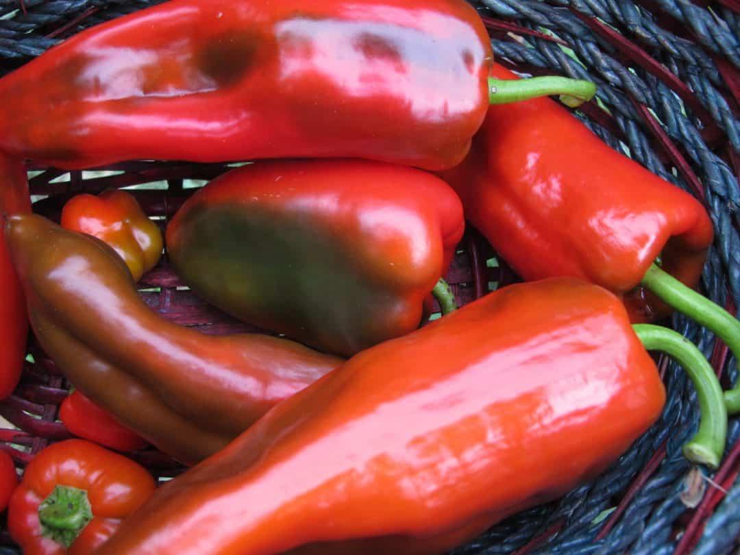 Best heirloom sweet pepper varieties the free range life - Best romanian pepper cultivars ...