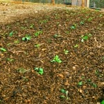 beginning gardening tips