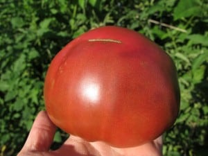 When it comes to heirloom tomato varieties you have a lot to choose from! Here are 10 of my favorite heirloom tomato varieties for you to try this year!
