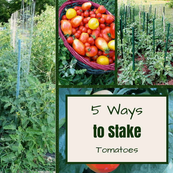 5 Ways to Stake Tomatoes