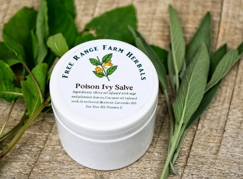 Poison ivy salve tub with a label and fresh sage and jewelweed sprigs