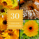 30 Uses for Calendula