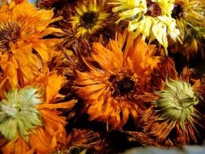 dry calendula.jpg