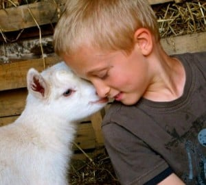 love your goat