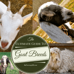 The Ultimate Guide to Goat Breeds