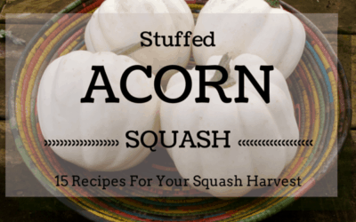 15 Stuffed Acorn Squash Recipes