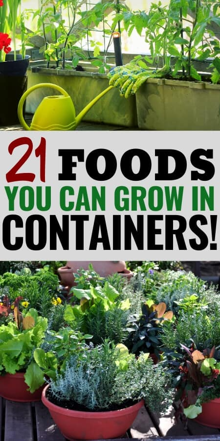 21 Crops You Can Grow in Containers with tomatoes and herbs in pots on decks