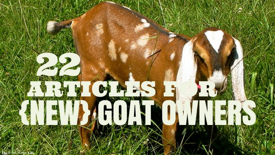 22 Articles to Read Before Getting Goats
