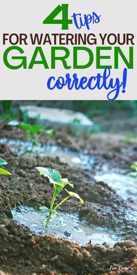 4 Tipps zur richtigen Bewässerung Ihres Gartens