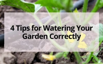 How to Water Your Garden Correctly