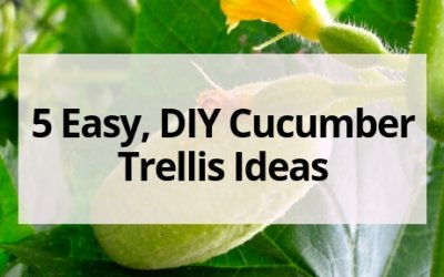 5 Easy, DIY Cucumber Trellis Ideas