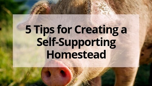 5 Tips for Creating a Self-Supporting Homestead
