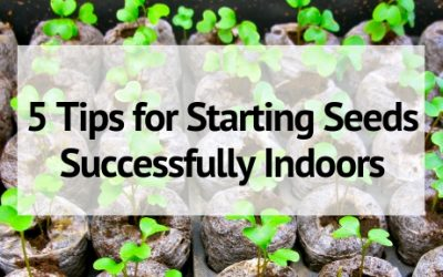 5 Tips for Starting Seeds Successfully Indoors