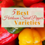 Best Heirloom Sweet Pepper Varieties