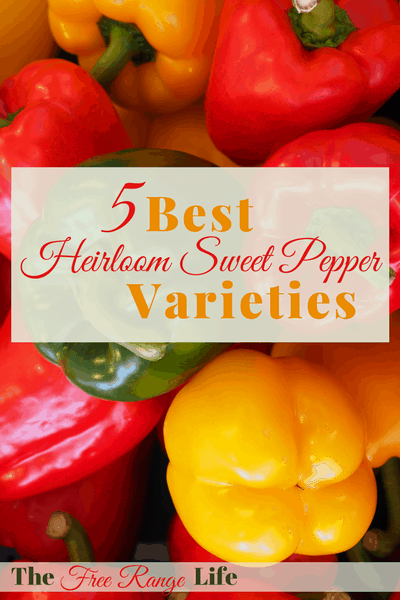If you are overwhelmed with your choices when it comes to growing sweet peppers, check out this list of the 5 Best Heirloom Sweet Pepper Varieties!