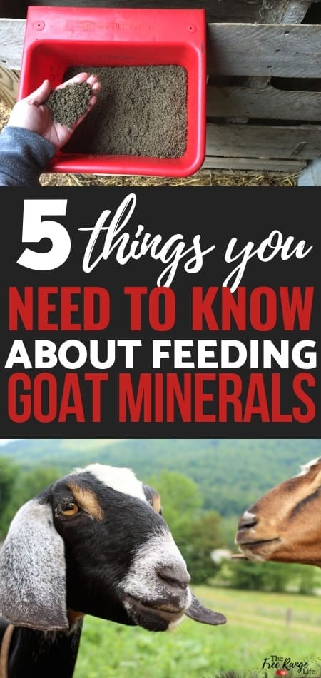 Raising Goats: Goat nutrition is an important part of keeping your goat healthy. Learn why goat minerals are the most important part of your goat's nutritional health.