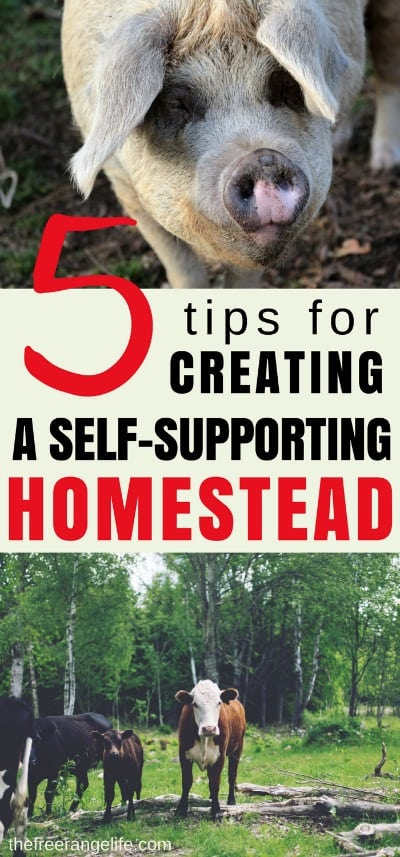 Make your hoemstead pay for it self! Learn how to create a self supporting homestead that pays for it's own upkeep and expenses. It is one of the first steps in becoming fully self sustainable!