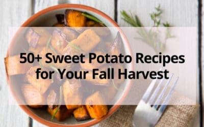 50+ Sweet Potato Recipes for Your Fall Harvest