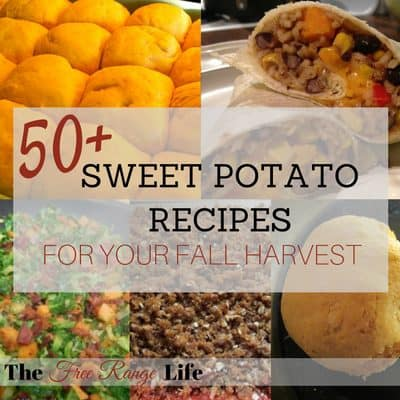 50+ sweet potato recipes for your fall harvest!