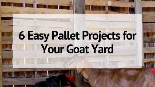6 Easy Pallet Projects for Your Goat Yard