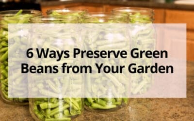6 Ways Preserve Green Beans from Your Garden