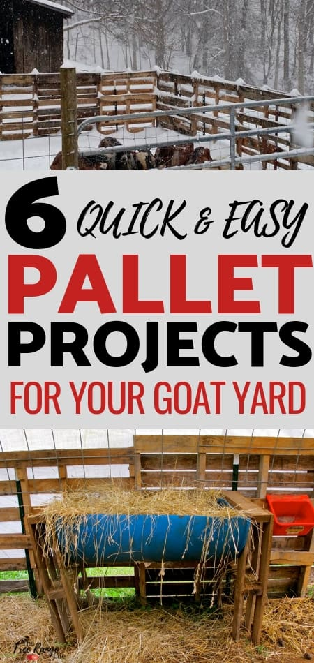 Raising Goats: Your goat yard doesn't have to be expensive, check out these 6 super easy pallet projects for your goat yard!