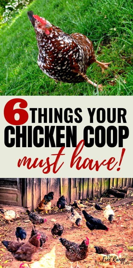 Backyard Chickens: Do your chickens have everything they need? Check out these chicken coop requirements to make sure!