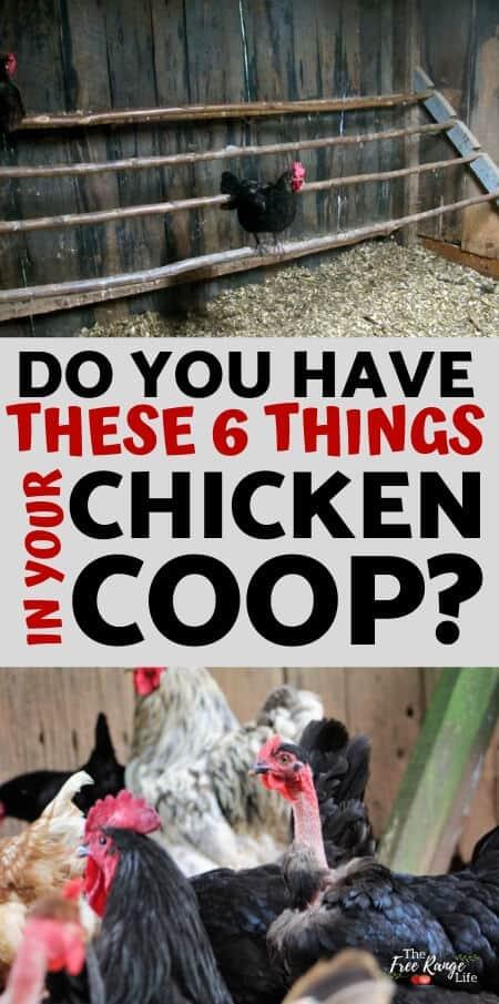Chicken Coop Necessities_ 6 Things Your Coop Must Have