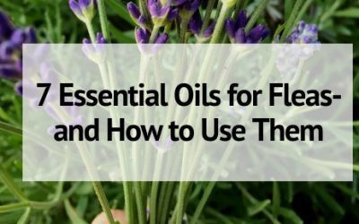 6 Essential Oils for Fleas- and How to Use Them in Your Home