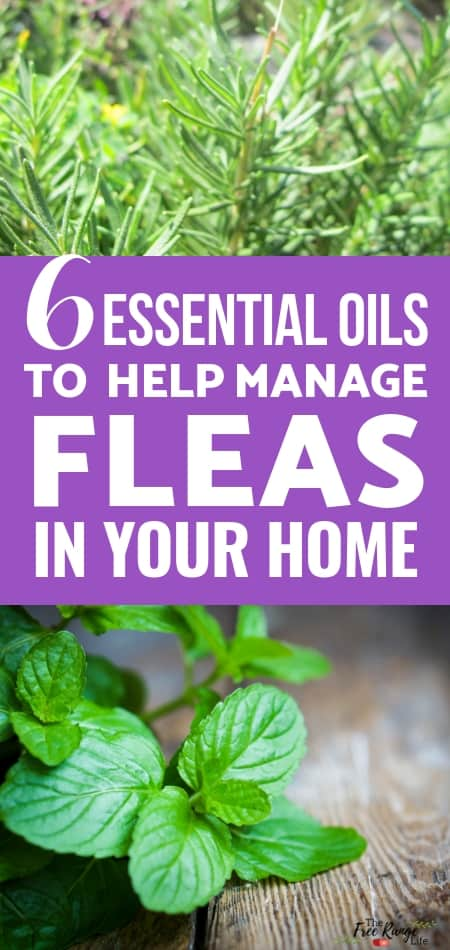 Esential oils & Natural Home: Try one of these 6 essential oils for fleas in your home and pet's bedding